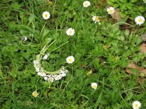 זר מרגניות על הדשא